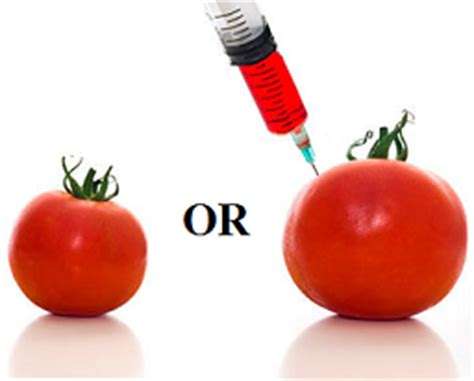 The Risk of Genetically Modified Foods Essay - 563 Words